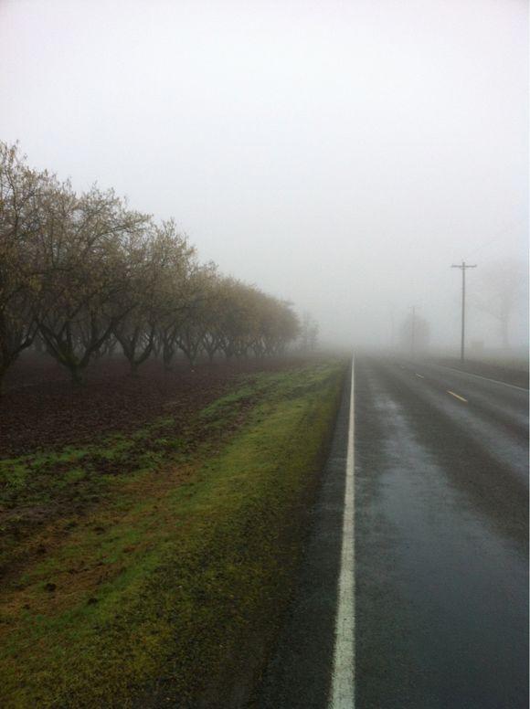 Fog.......Again