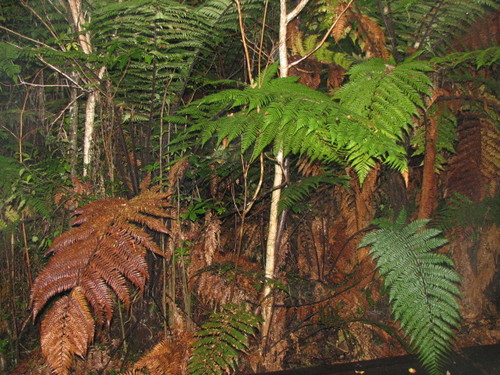 Rainforest Outside Our Room at Franz Josef